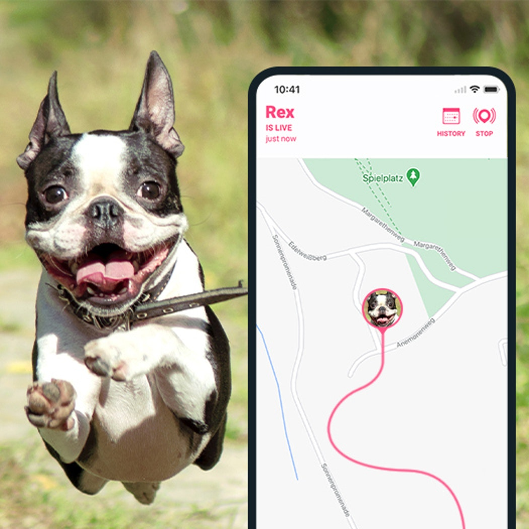 Your Tractive GPS tracker is packed with awesome. For example, LIVE Mode, which gives location updates every 2-3 seconds. Or Location History, which maps out your dog's movements... and might even give you an idea for an Easter egg design!