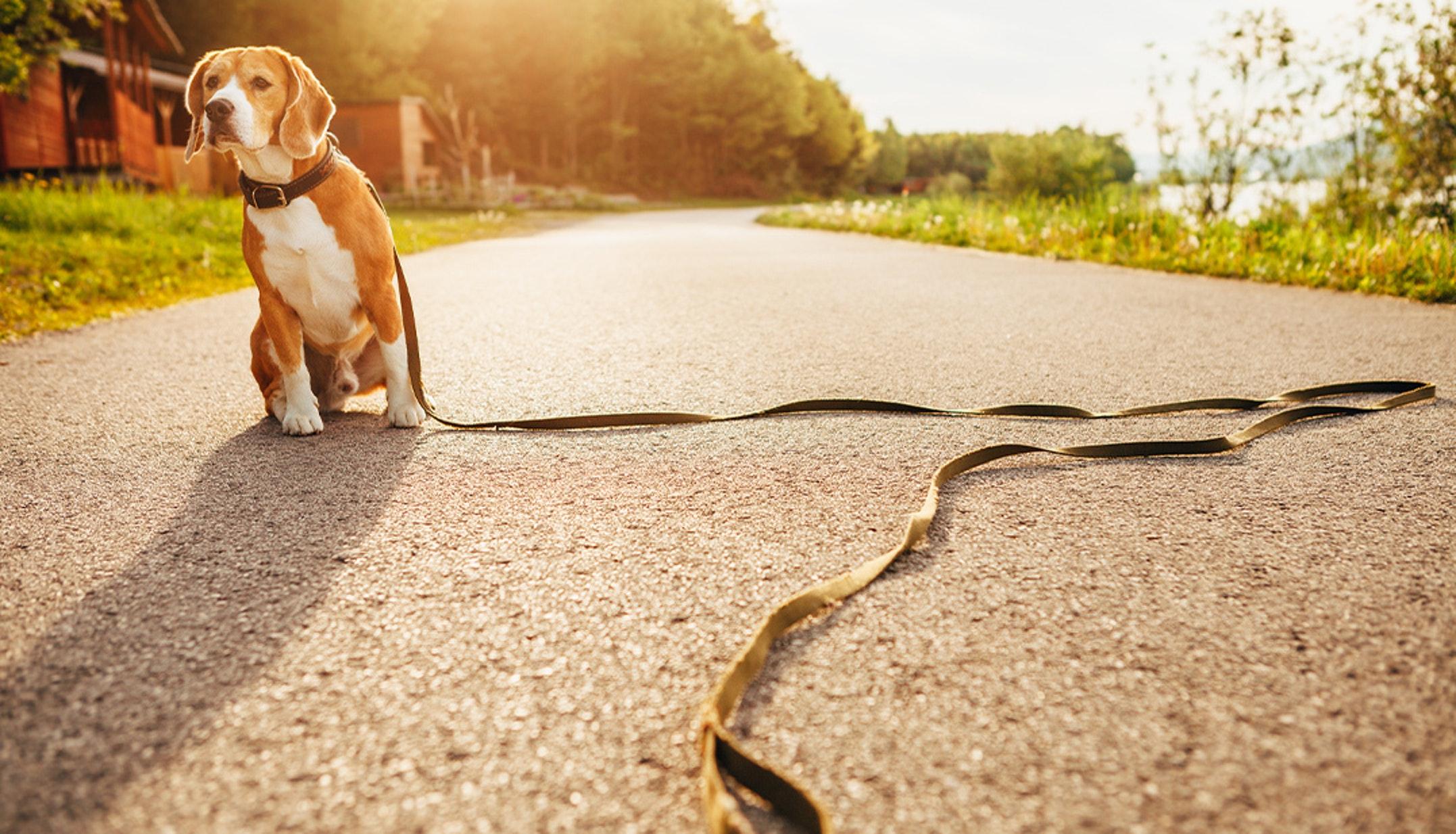 Hai mai perso il tuo cane? O hai pensato di averlo perso? Evita l'ansia di perderlo. Non perdere mai il tuo cane con il 20% di sconto su Tractive.