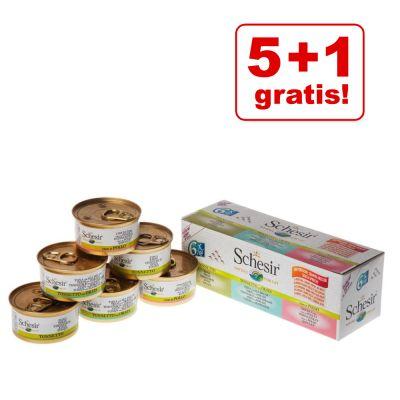 5 + 1 gratis! 6 x Pacco misto Schesir