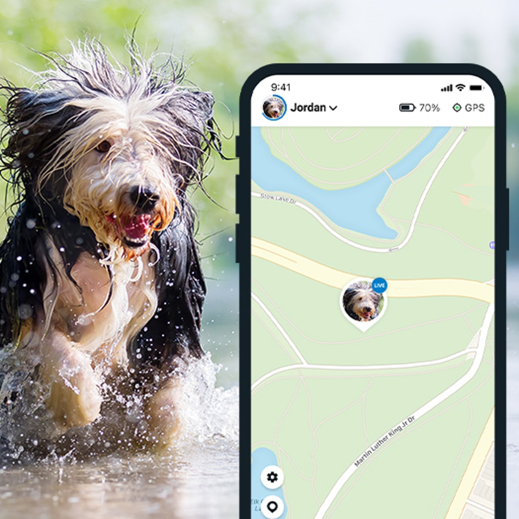 Always know where your buddy is. Even if they run off, you can follow their every step in real-time - and find them in no time.